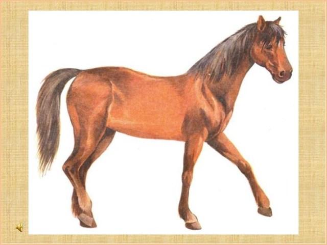 Красивая лошадка
