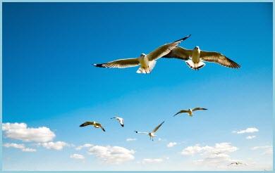 картинка альбатрос