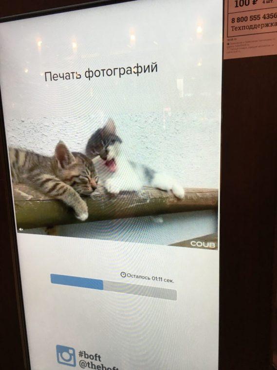 4 Cats Loading Screen