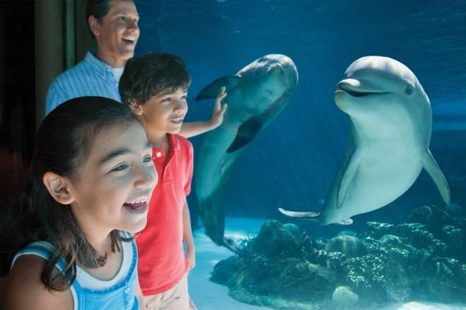 Dolphin_under_water_Hisp_family.jpg