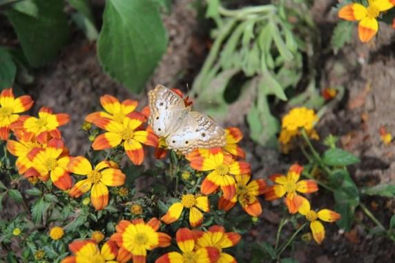 flower and garden festival (149)