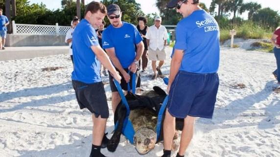 Projetos de conservação do SeaWorld