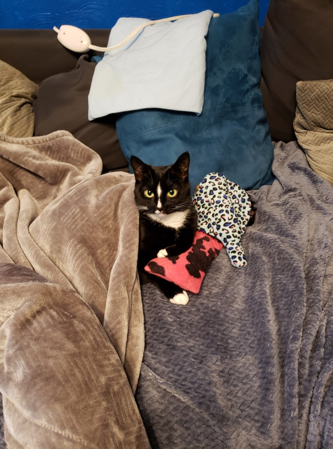 Tonks - the most interesting kitten in the world