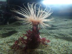 Schönheit unter Wasser.