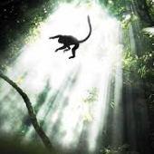 Amazonija (2013) dokumentarni film gledaj online
