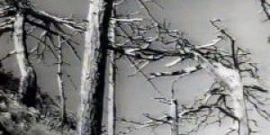 Sam (1959) domaći film gledaj online