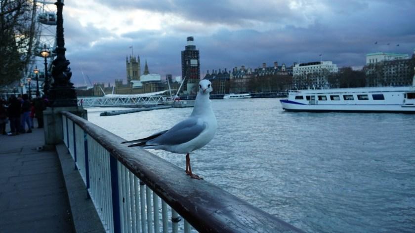 заняться в Лондоне (3)