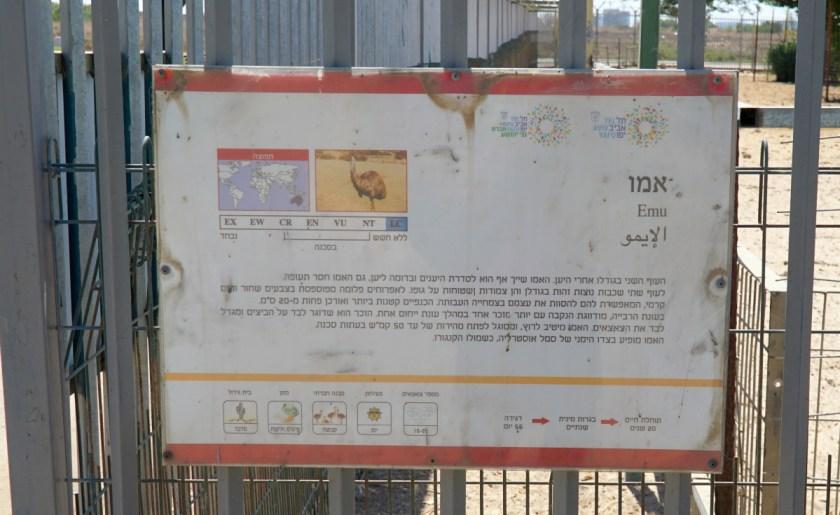 спорт в Израиле (2)