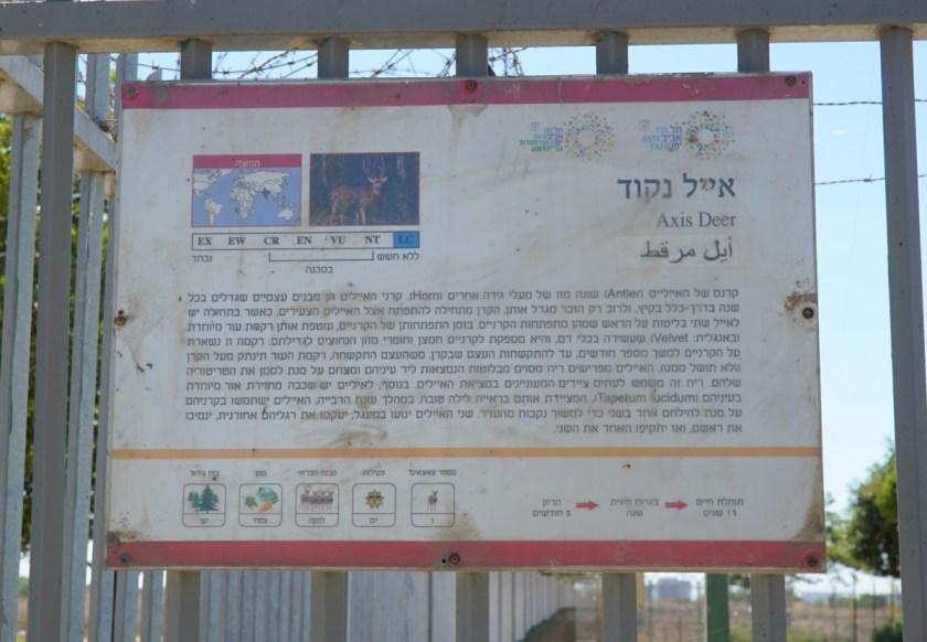 спорт в Израиле (3)