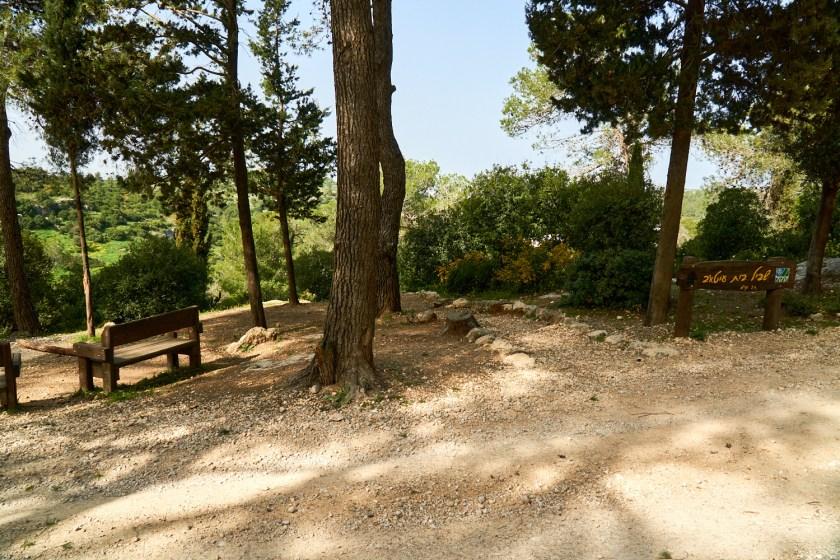 Израиль лес