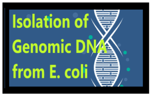 Isolation of Genomic DNA from E.coli 1