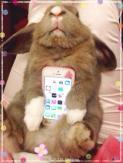 conejos vivos como carcasas de telefonos móviles 03