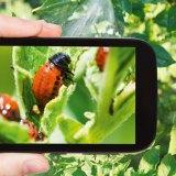 Tipp: Das Smartphone als Lupe verwenden