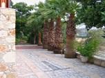 Nicos' Garden