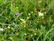 Wild flower1