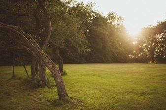 garden_PoundonHouse_Matt_Penberthy.