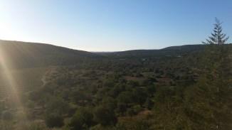 nearby grasslands