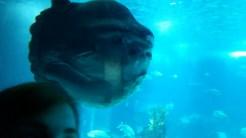 look! a sunfish!