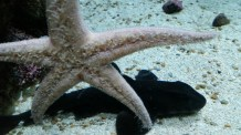 a star fish says hello