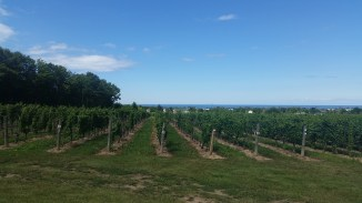 the vines at Hernder