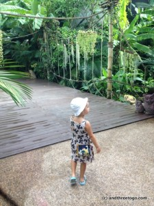 Z taking all the scenery at the Phuket Bird Park.