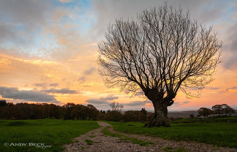 Lone tree near Cartmel Fell