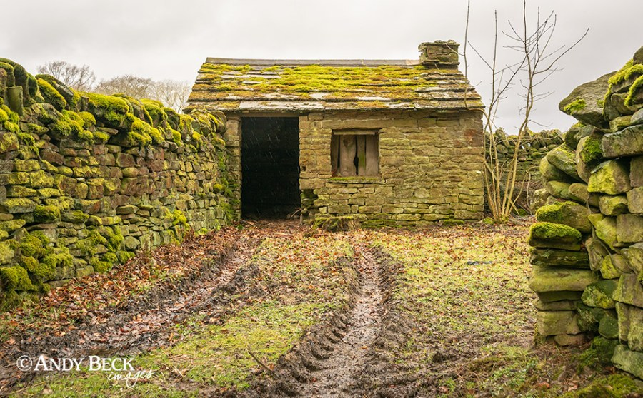 The moss covered shed