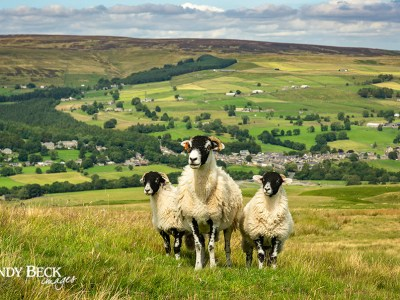 Above Middleton in Teesdale