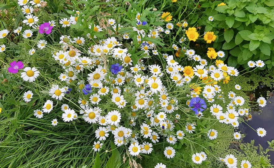 Wildflowers on the garden