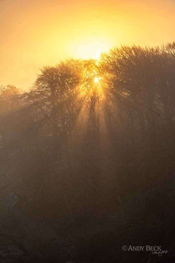 Sun through the fog