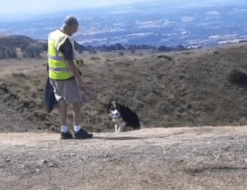 Meet Ben who picks litter on the Titterstone Clee – he's a border collie (with video)