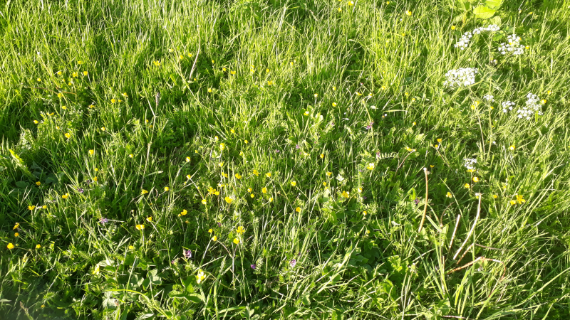 Viv Parry to challenge Shropshire Council on mowing of verges and destruction of wildflowers