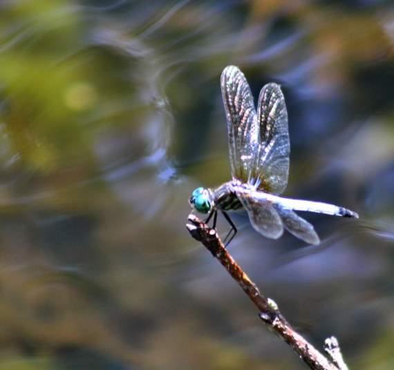 Electro Dragonfly - Copyright 2011 by Andrew Brandt