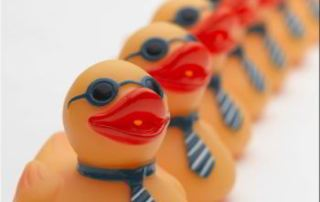 Ducks in a Row - from Photobucket