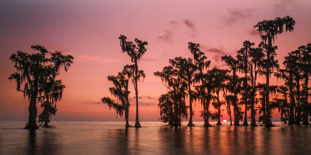 Swamp sunrise photography
