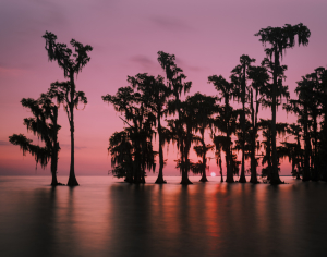 Louisiana swamp sunrise photography