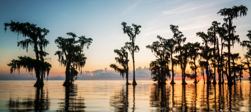 Louisiana swamp photography
