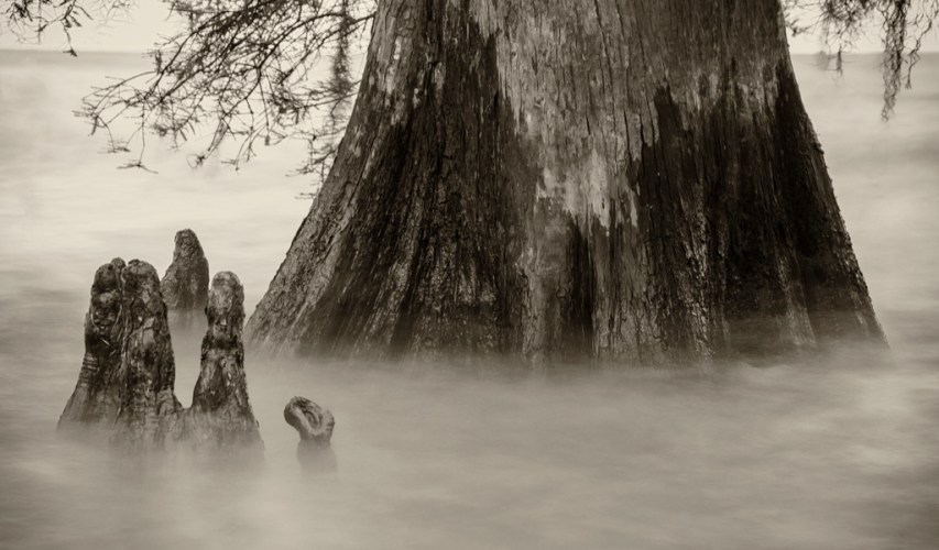 Lake Maurepas cypress trees photography