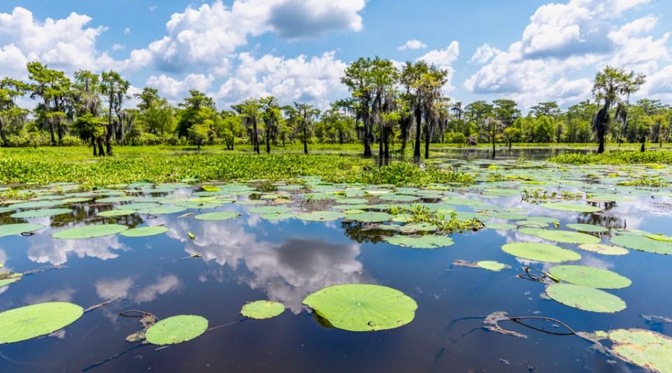 Atchafalaya Basin swamp photography