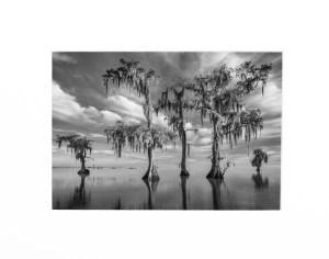 lake maurepas swamp photography