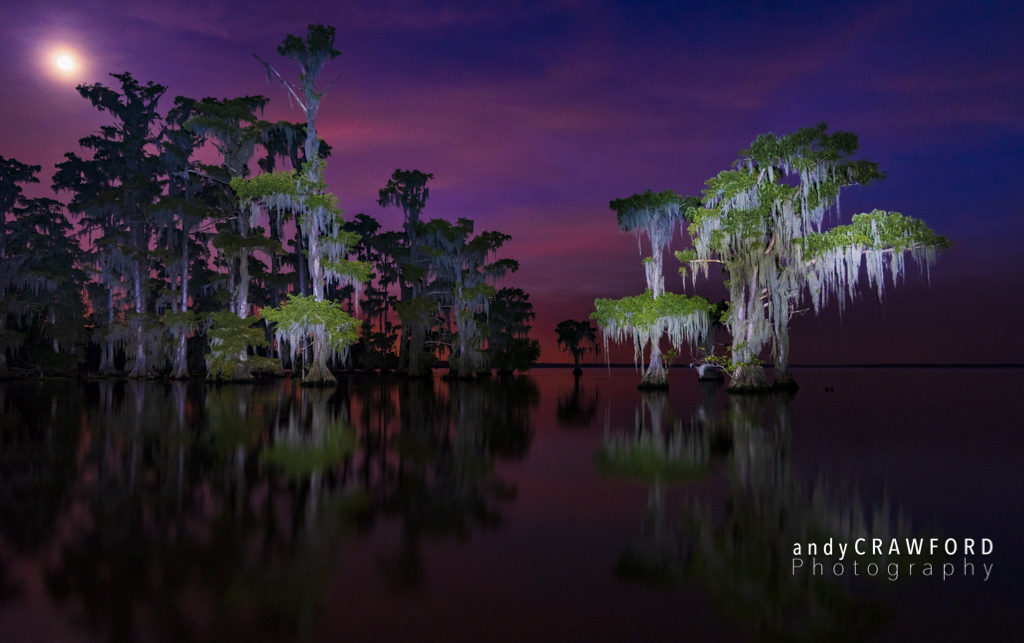 Light painting the louisiana swamp andy crawford photography light painting the louisiana swamp aloadofball Image collections
