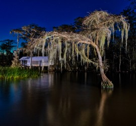 nighttime swamp photography
