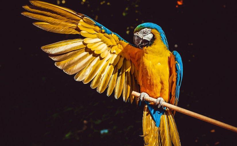 Drei Chlini Vögel (Bob Marley)
