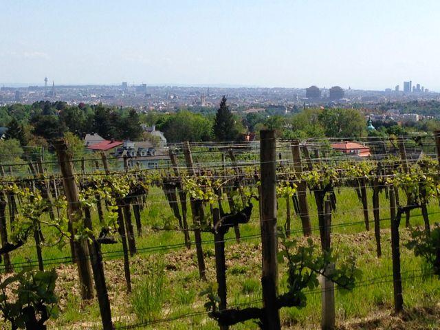 Vienna and Vineyards from Krapfenwaldgasse Wien 1019