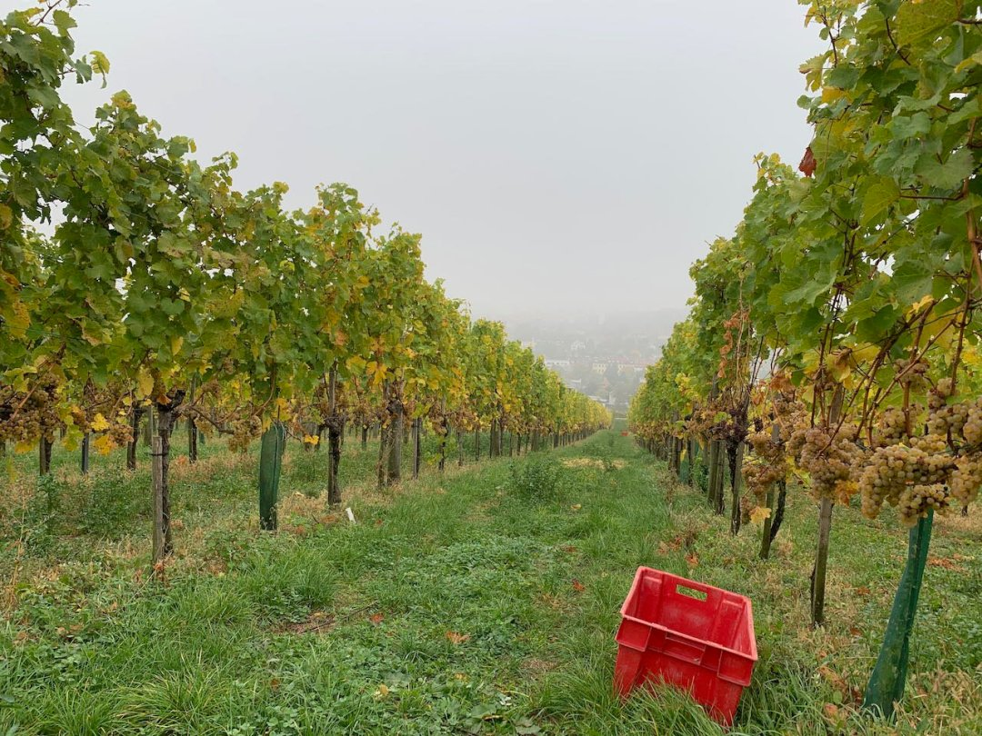 Photo of a vineyard with red harvest bin on a gray day in Vienna