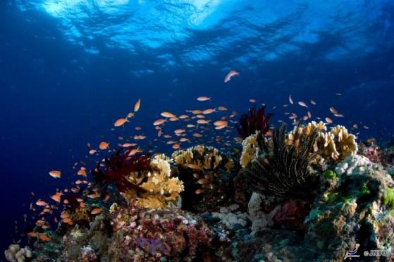 Okinawa's amazing coral life. ©Mike Jimenez & Piranha Divers Okinawa/©JNTO