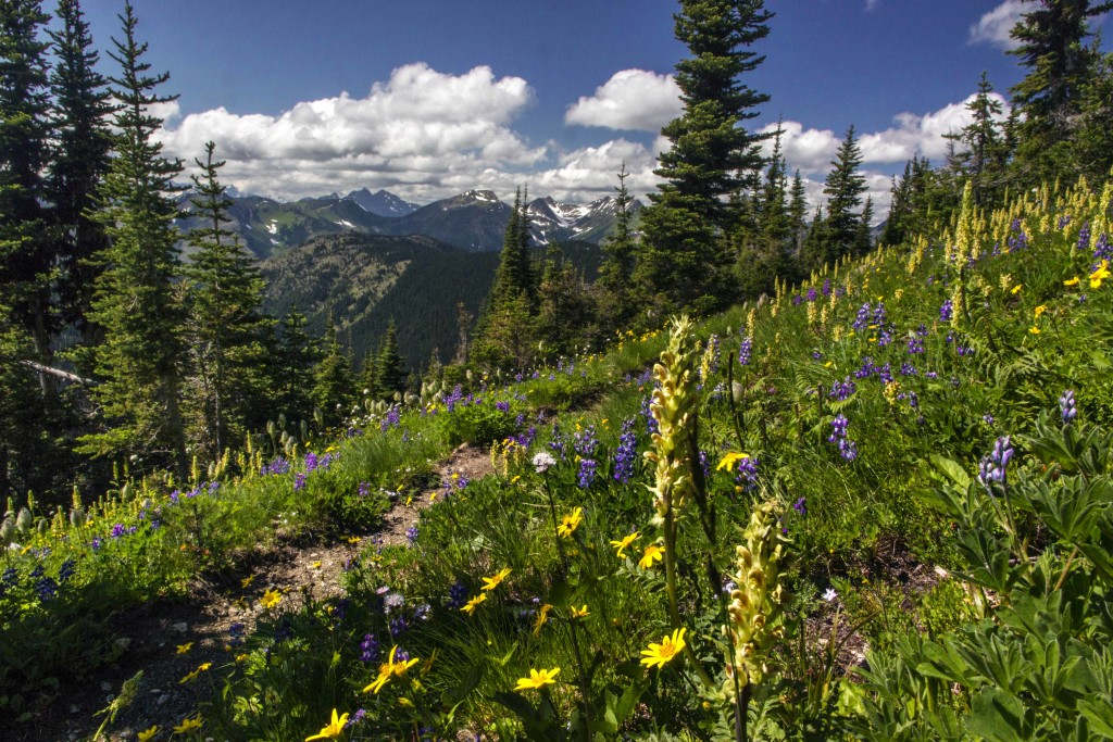 Pacific Crest Trail, Pasayten Wilderness
