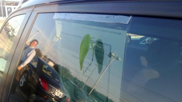 Leaf Bug Shops Leikin