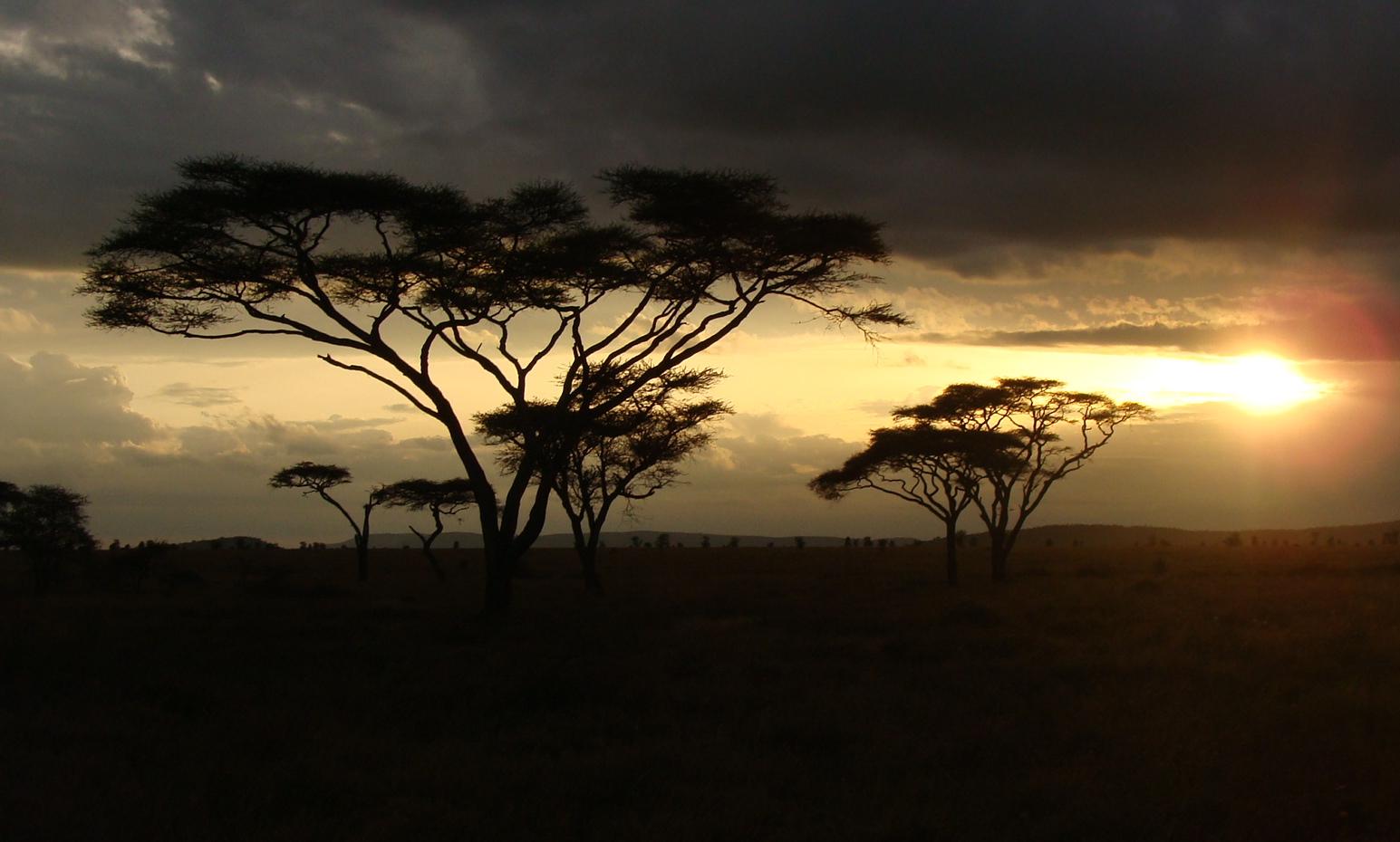 Serengeti sunset