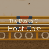 Voice Over Andy Taylor. USHJA Basics of Hoof Care